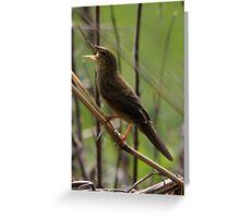 Grasshopper warbler Greeting Card