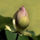 Lotus by SuddenJim