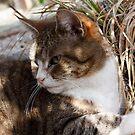 Cleo enjoying the spring sunshine by Joanne Plimmer