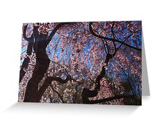 Cherry Willow Swaying In The Wind  Greeting Card