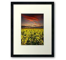 Rapeseed Sunset Framed Print