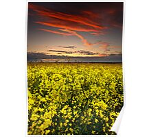 Rapeseed Sunset Poster
