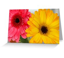 Gerber Daisies ~Pink & Orange Greeting Card