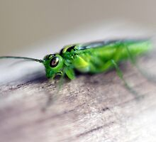 Alien bug 3 -  Rhogocaster Viridis (Sawfly) by LisaRoberts