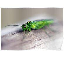 Alien bug 3 -  Rhogocaster Viridis (Sawfly) Poster
