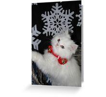 Xmas Kitten Greeting Card
