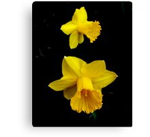 Spring in Yellow Canvas Print
