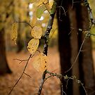 Autumn succumbing to Winter by Becca7