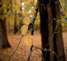 Autumn succumbing to Winter by White Owl