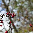 Autumn's Berries by Becca7