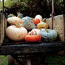 Happy bright  Pumpkins by Becca7