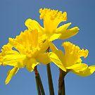 Blue Sky Floral Calendars Photography Flowers by BasleeArtPrints