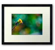 Discovering one's own personal style Framed Print