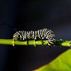 Hungry Caterpillar by Nugent Visuality