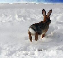 Runaway Rabbit by mokacat