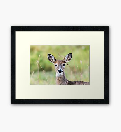 Portrait of a Whitetail Deer Framed Print