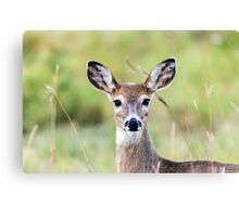 Portrait of a Whitetail Deer Canvas Print