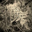 Frosted Ferns II by Aaron Bottjen