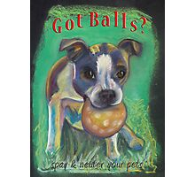 Boston Terrier - Spay/Neuter Photographic Print