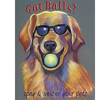 Golden Retriever - Spay/Neuter Photographic Print