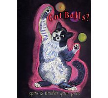 Juggling Cat - Spay/Neuter Photographic Print