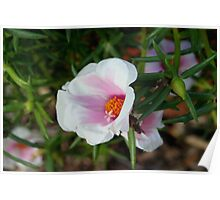 Pink and white wildflowers Poster
