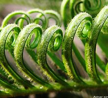 Curly Paradise Of Nature by amar singh