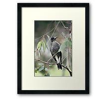 Mr  Magpie Framed Print