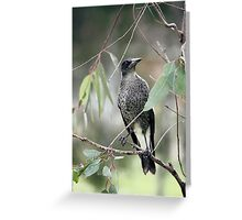 Mr  Magpie Greeting Card