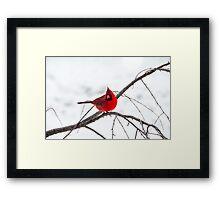 Cardinal On A Branch  Framed Print