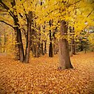 Autumn's leaving us so fast..... by Becca7