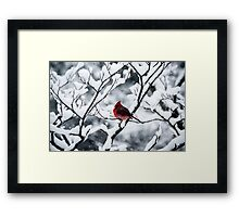 Cardinal In Snow Covered Tree Framed Print
