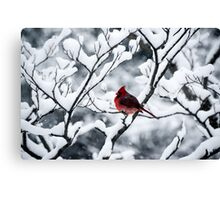 Cardinal In Snow Covered Tree Canvas Print