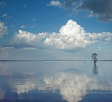 Can you believe? This is the Mississippi River! by Bonnie T.  Barry