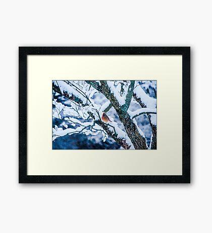 Female Cardinal In Snowy Tree Framed Print