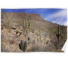 Beauty in the Desert Poster