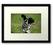 Eyes on the ball Framed Print