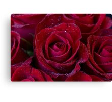 Massed Ruby Roses Canvas Print