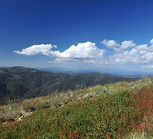 Mt Buller Summit by Michael Barnett
