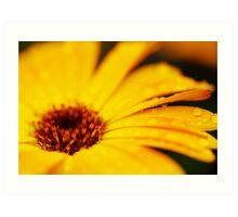 The Yellow Flower II Art Print