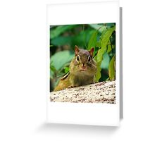 Chipmunk with mouth full of food :) Greeting Card