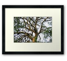 gumbo branches out Framed Print