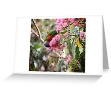 ~ Colours of the  Rainbow ~ Greeting Card