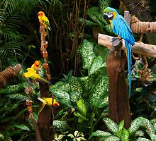 Birds at Jurong Bird Park Singapore by Steve Bass