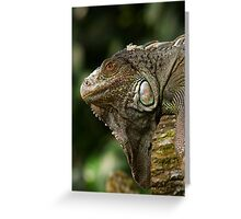 Lizard at Singapore Zoo Greeting Card