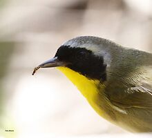 Common Yellowthroat with lunch by Dennis Cheeseman
