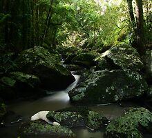 Stream at Kondalilla National Park by Steve Bass