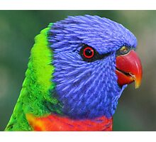 Lorikeet Portrait Photographic Print
