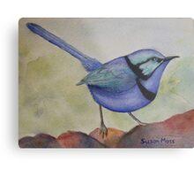 Splendid Blue Wren Metal Print