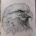 Bald Eagle by freespirit1972